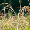 Spring Prairie Grasses