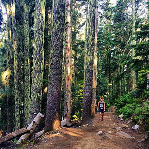hiking in one of British Columbia's big and beautiful forests
