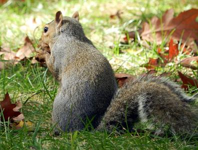 Squirrel Study, 10-16-11