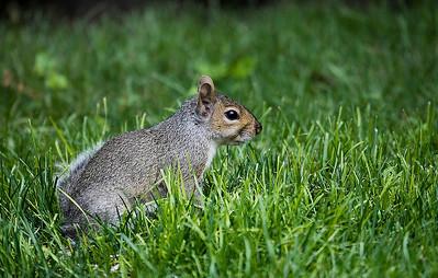 Squirrel @ Work