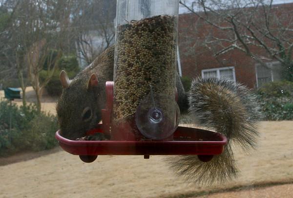 Squirrel on the Window Feeder