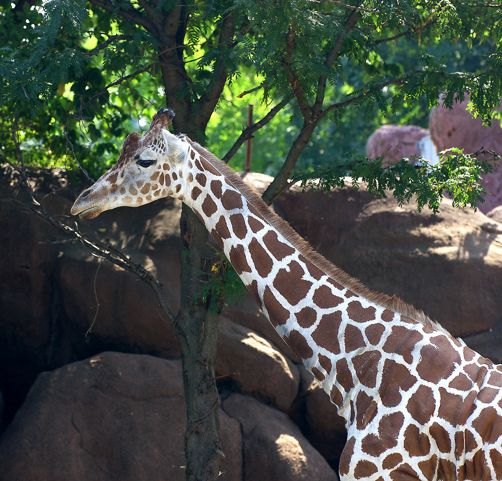 A photographic journey through the St. Louis Zoo.