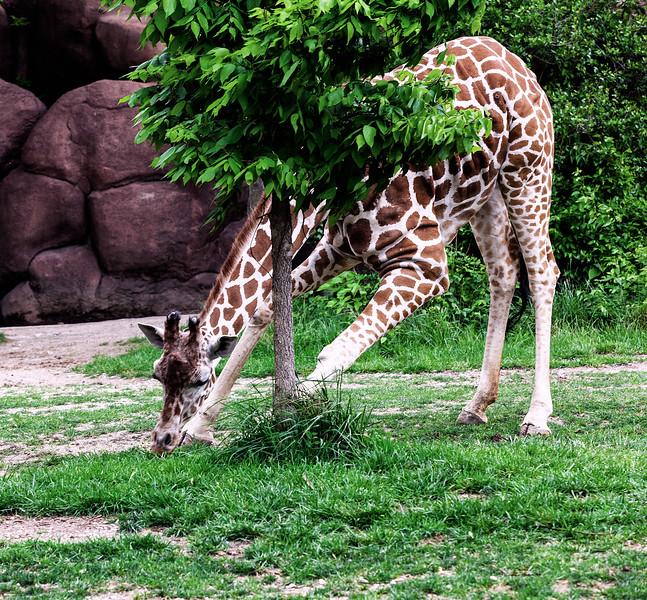 St. Louis Zoo, Spring 2012