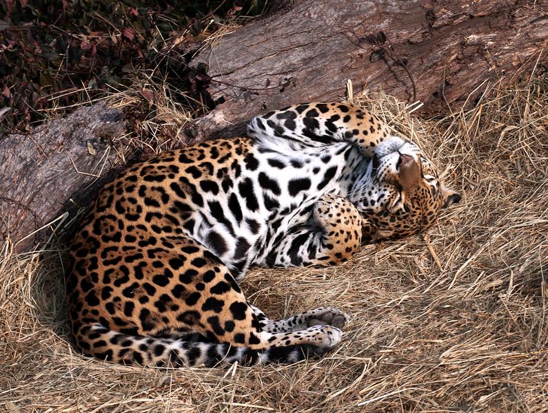 Zoo Safari, Winter 2011