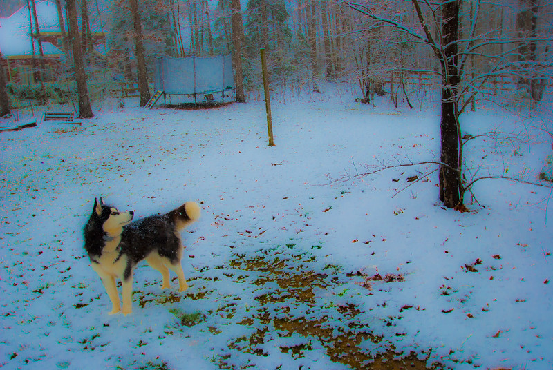 Winters inevitable spring - LunaBear spots a squirrel