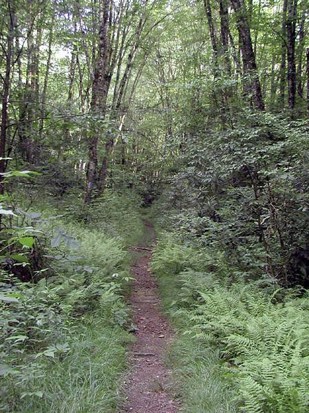 Kimsey Creek Trail<br /> Nantahala NF, NC