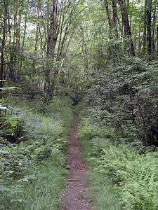 Kimsey Creek Trail Nantahala NF, NC