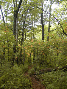Section of the Appalachian Trail from Deep Gap to Standing Indian Flame azaleas light the way! Southern Nantahala Wilderness, NC 6/24/07