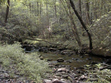 Kimsey Creek <br /> Nantahala NF, NC