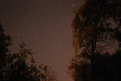This is the little dipper. The North star is near the top next to the tall tree. The cup is on the left side of picture.