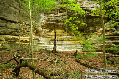 Illinois Canyon. Starved Rock State Park Illinois.