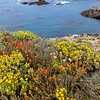 Along Sea Lion Poin trail, Point Lobos State Reserve