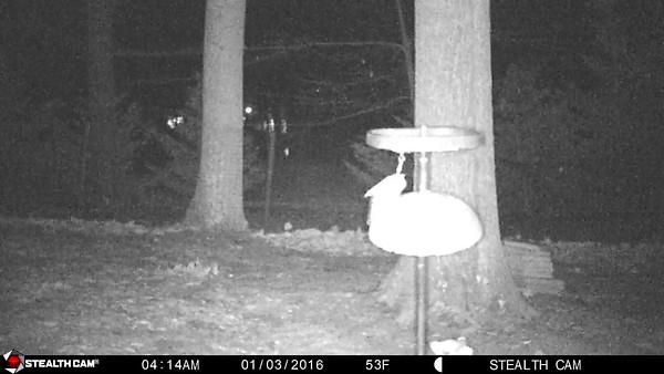 Stealth Cam Videos