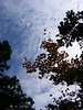 Leaves and sky at Letchworth (JR)