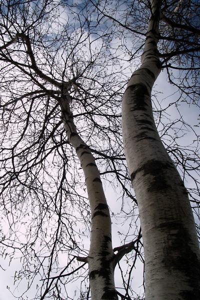 Branching Out<br /> <br /> May 4, 2007<br /> <br /> Shenandoah National Park, VA