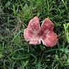 A cool looking mushroom.
