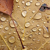 Water Droplets on Leaf - Fireman's Park, Niagara Falls