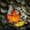 Glass Leaf