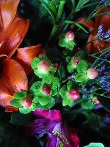 Beautiful Flowers from a Valentine's Day Bouquet