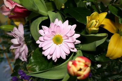 Beautiful Flower from an Easter Bouquet