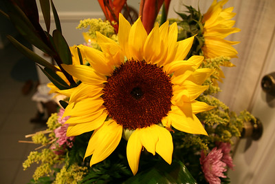 Beautiful Sunflower from a Valentine's Day Bouquet