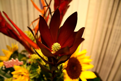 Beautiful Flower from a Valentine's Day Bouquet