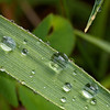 Water Droplets on Grass - Close-up of dew drops on a blade of grass - Welcome Lodge, Lavigne