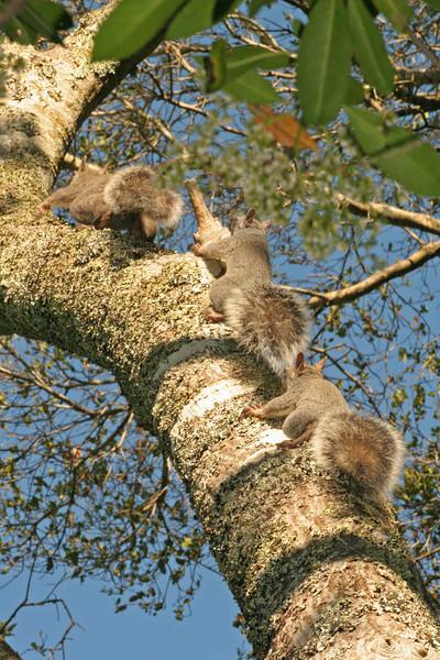 3Squirrels8889 (18x12)