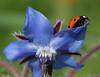 Ladybug(8 5x11)9505
