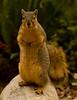 RedSquirrel9056(8 5x11)