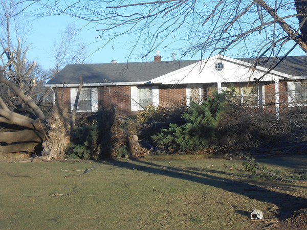 Several trees were ripped out of the ground by their stumps following the over 60 mile per hour winds Sunday.