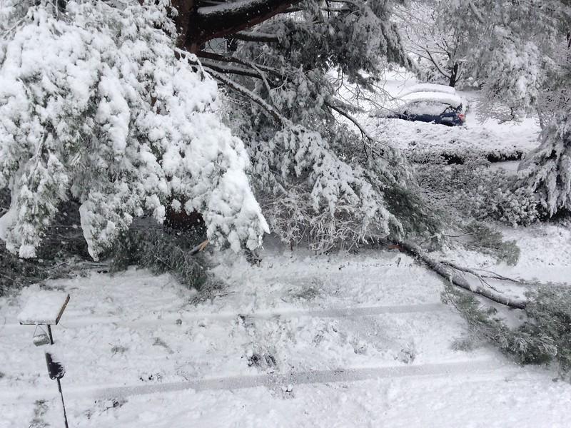 Nature's tree-trimming