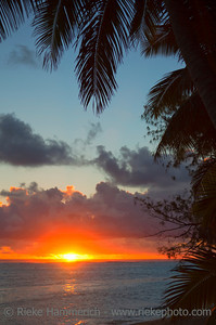Sunset over Lagoon framed from Coco Palms - Rarotonga, Cook Islands, Polynesia