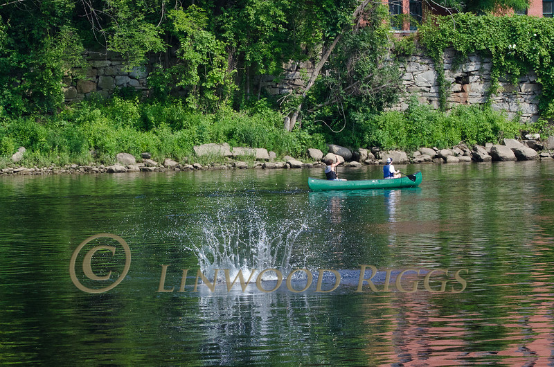 Canoeists pass by as a large sturgeon jumps, then splashes down in the Kennebec River in Augusta, Maine