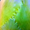 Agave leaf