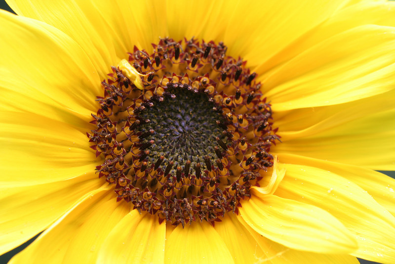 Sunflower from Birdseed !