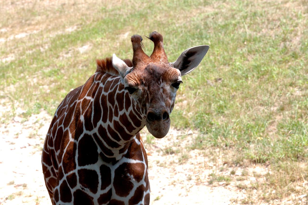 St. Louis Zoo, Summer 2011