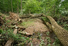 These trees fell after derecho storm on 6/29/2012