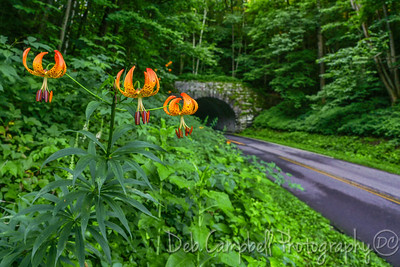 Turks Cap Lily at Big Witch Tunnel