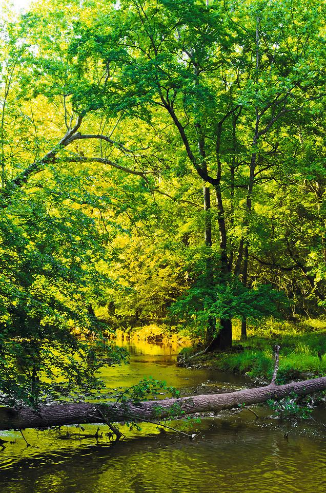 BB, Rock Creek Park Added back orange (creek bank) and purple (log) after changing color profile