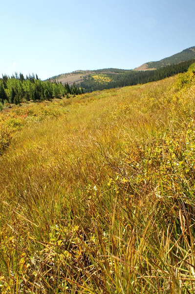 early fall colors in the meadows, Caribou area, Colorado