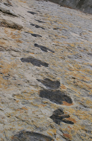 Dino Tracks, Dinosaur Ridge, W. Alameda Parkway, Morrison, Colorado