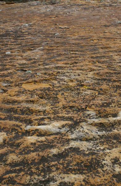 Ripple Marks, Dinosaur Ridge, W. Alameda Parkway, Morrison, Colorado