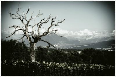 Le Mont-Blanc vu de Sergy (Ain-France)