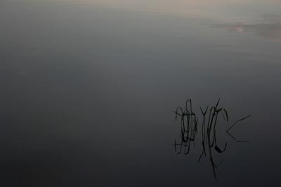 grass, reflected
