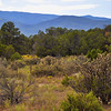 New Mexico - beyond Sandia -  arroio in summer -