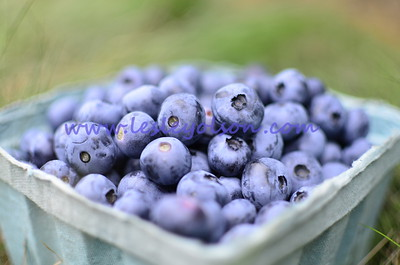 New England blueberries