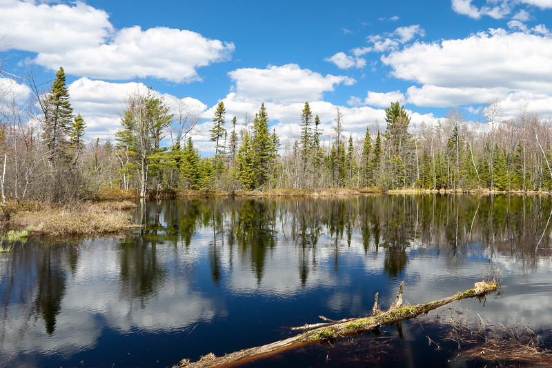 """""""Springtime Reflections of a Beautiful Time"""" (4)"""