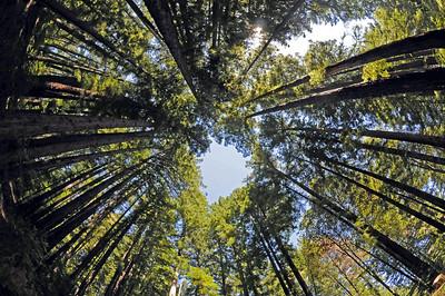 Summit Redwoods 2013