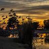Sun City sunset-Widgens 1-4-17_MG_2717